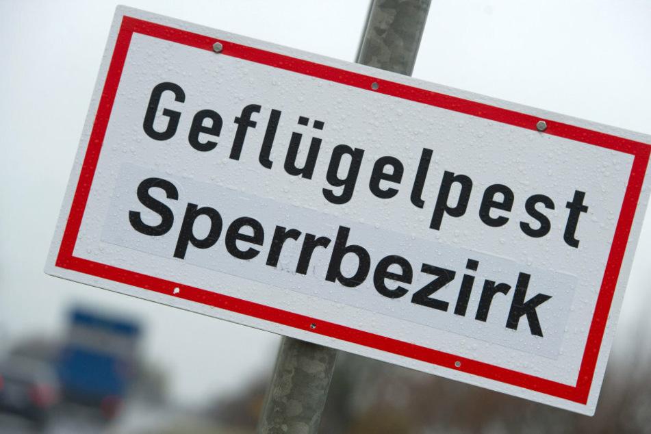 """Ein Schild mit der Aufschrift """"Geflügelpest Sperrbezirk"""" steht an einer Straße. (Archivbild)"""