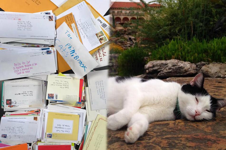 Zahlreiche Briefe (l.) erreichten die beiden Museumskatzen. Rechts im Bild: Perilla sonnt sich im menschenleeren Garten. (Bildmontage)