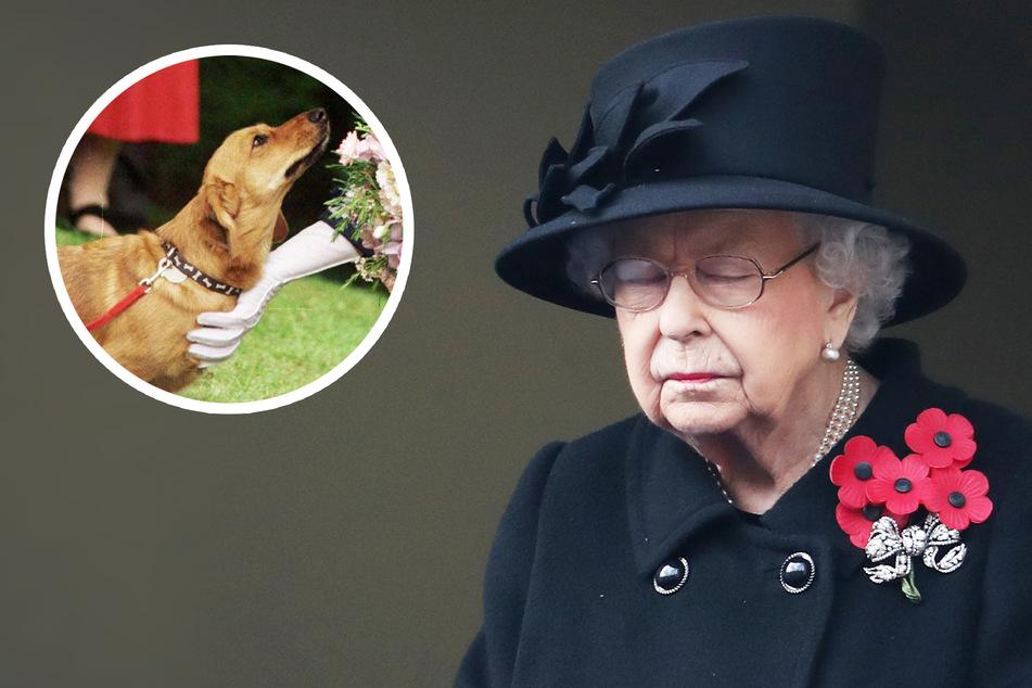 Britische Queen in Trauer: Ihr Hund ist überraschend gestorben!