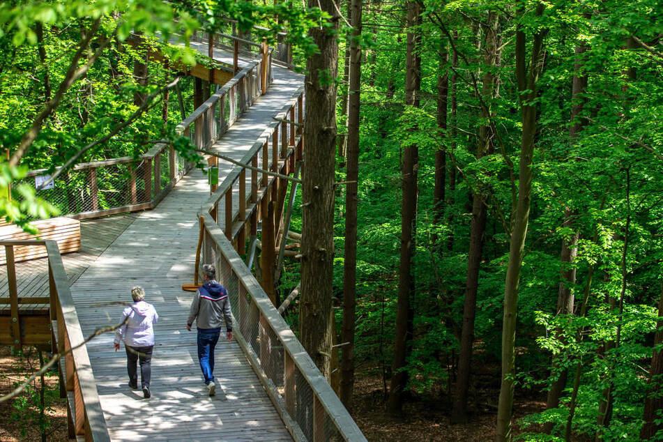 Besucher können den Pfad durch die Baumkronen des Heringsdorfer Waldes seit Juni begehen.