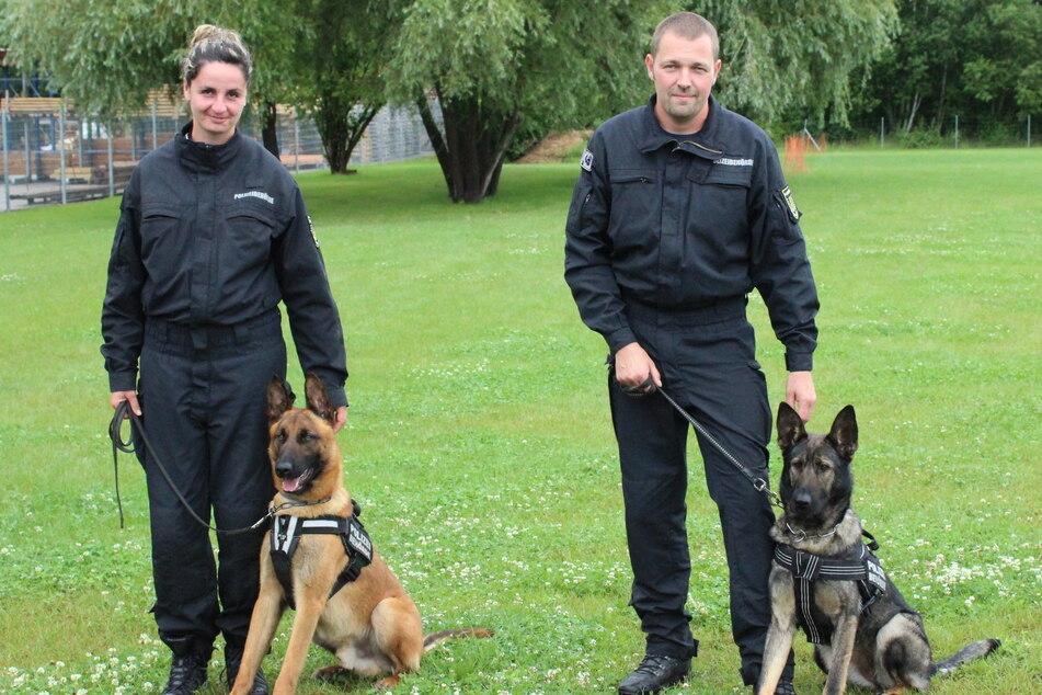 Fido (19 Monate, Malinois, l.) und Nina (19 Monate, Deutscher Schäferhund) sind die neuen Diensthunde im Ordnungsamt.