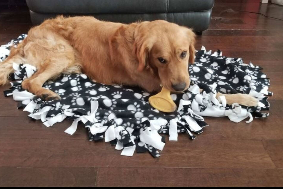The golden retrievers have been adopted by caring families around Florida.