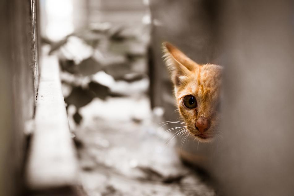 Ausgesetzt oder verletzt: Das solltet Ihr tun, wenn Ihr ein Tier findet!