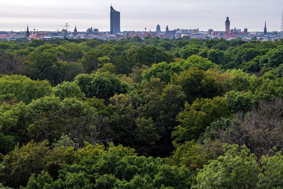 Leipzig: Leipziger Auwald ist in Gefahr! Land prüft schnelle Rettungsmaßnahmen