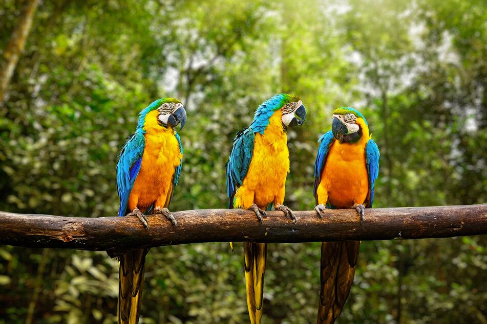 Die Papageien machten sich einen Spaß daraus, den Zoobesuchern Beleidigungen an den Kopf zu werfen. (Symbolbild)