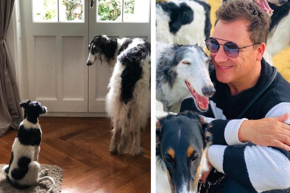 Guido Maria Kretschmer (56) und seine Barsois auf Instagram.