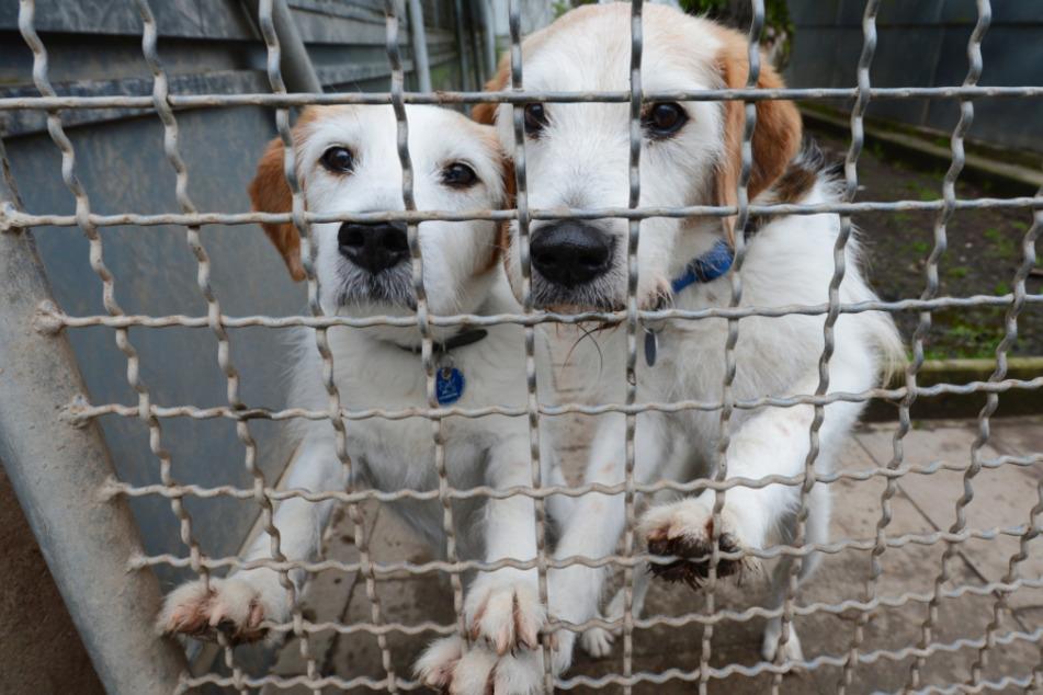 Zahlreiche Tierheime verwüstet und bestohlen: Belohnung ausgesetzt!