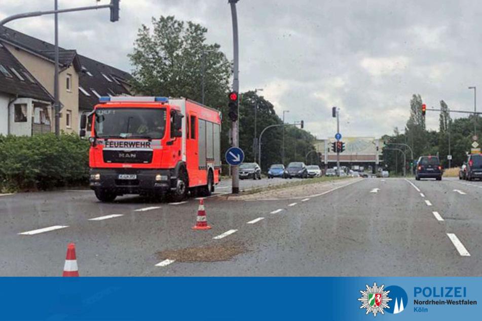 Am Montag war ein Bienenvolk mitten auf der Siegburger Straße in Köln-Poll gelandet.