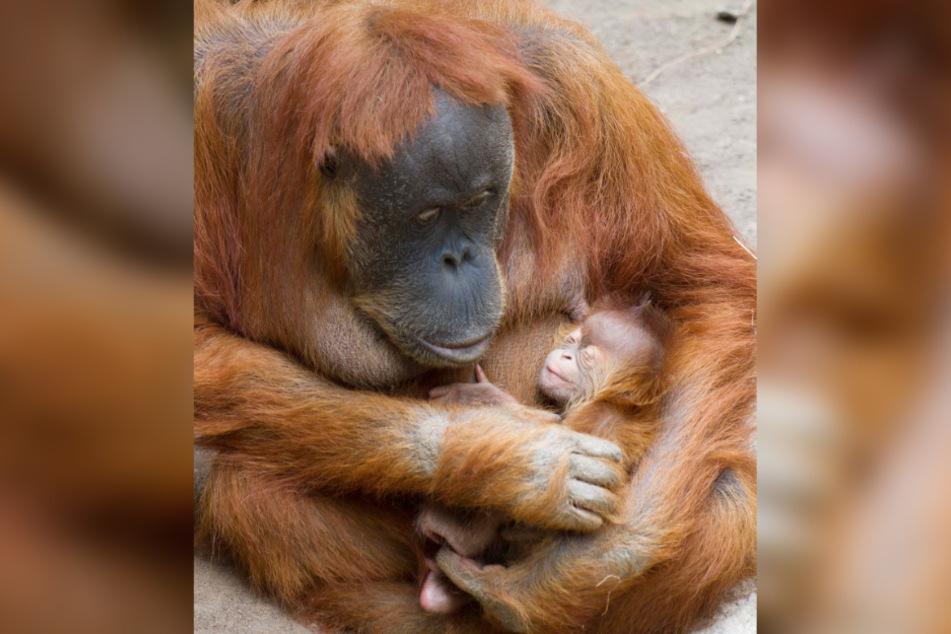 Pini (31) mit ihrer kleinen Tochter im Arm. Jetzt ist das kleine Mädchen gestorben.