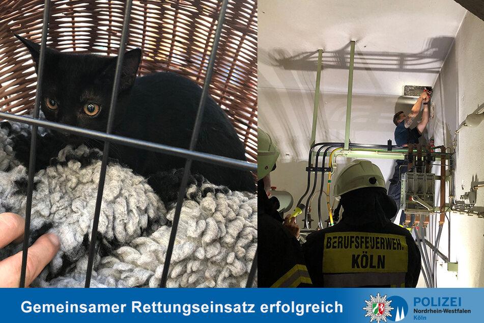 Wegen einer Katze kam es in der Kölner Innenstadt zu einem vierstündigen Einsatz von Feuerwehr und Polizei.