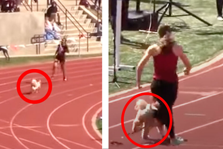 Runaway dog races to a track meet finish line and nearly breaks the world record