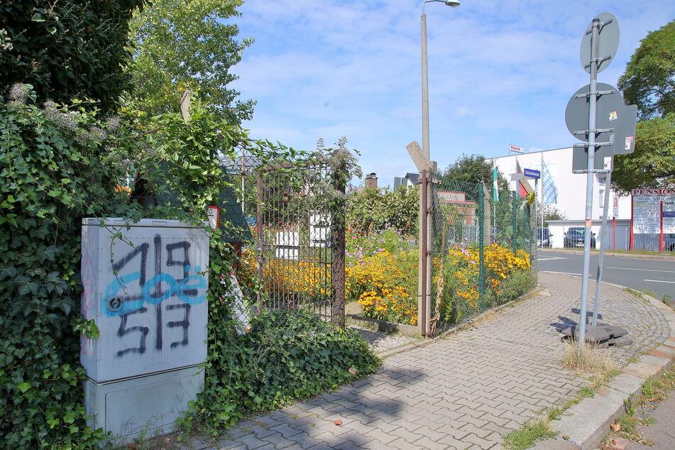 An der Hofmühlenstraße wollte das Pärchen sich mit frischen Pflanzen eindecken.