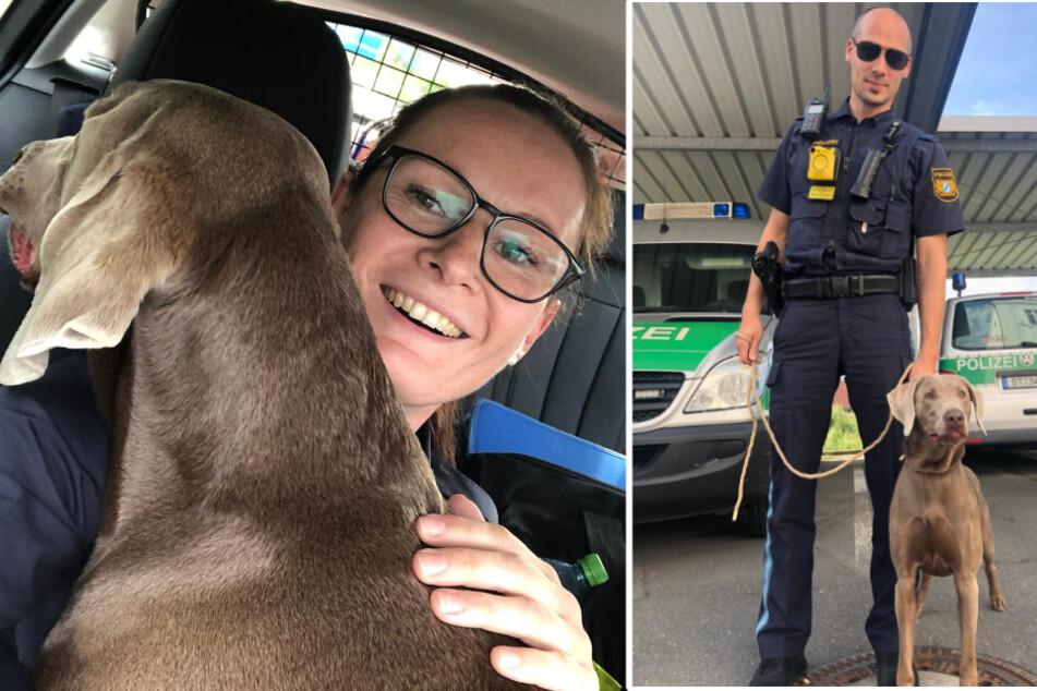 Die Polizei konnte den Hund sicher seiner Eigentümerin übergeben. Zuvor wurden noch ein paar Schnappschüsse gemacht.