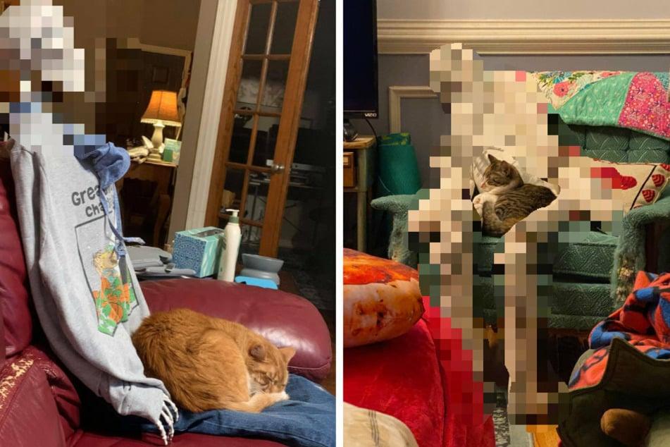 Was tut meine Katze, wenn ich tot bin? Frau findet die Wahrheit heraus