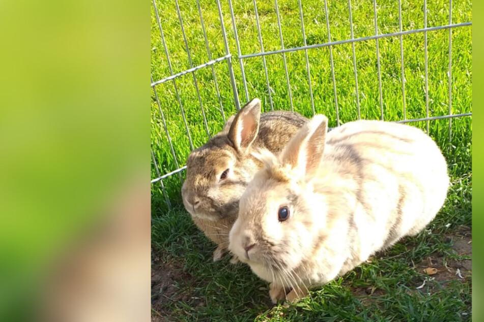 Familie glücklich: Gestohlene Kaninchen sind wieder da