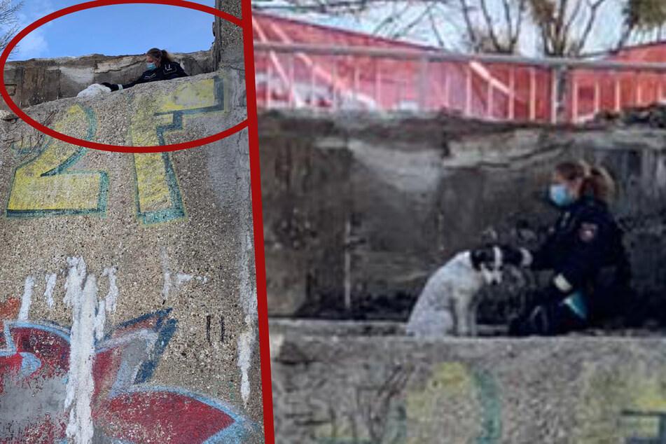 Hier wartet eine Hündin auf einer Brücken-Kante auf ihre Rettung