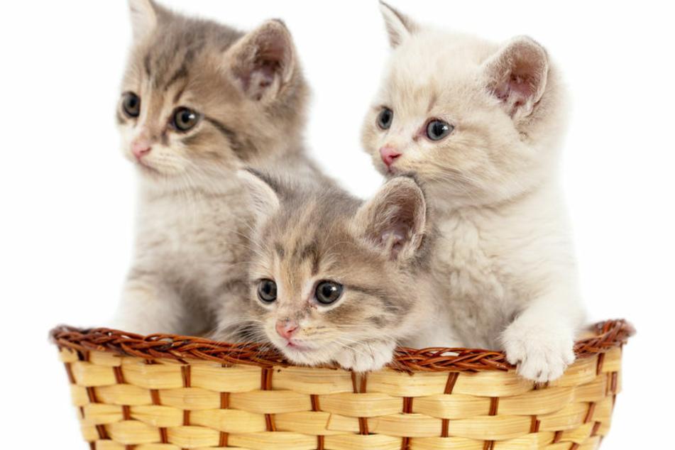 Vergiftet? Haben Tierquäler mehrere Katzen auf dem Gewissen?