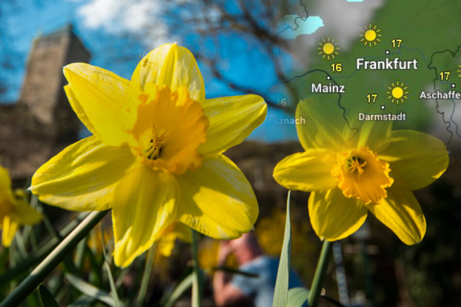 Der Frühling ist in Hessen angekommen: Wird die 20-Grad-Grenze geknackt?