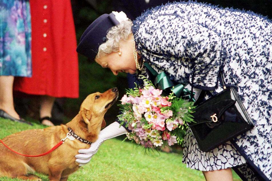 Queen Elizabeth II. streichelt einen ihrer Dorgi-Hunde.