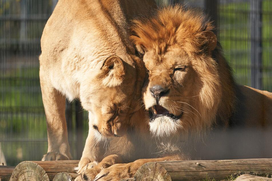 Zoos klagen wegen Corona-Krise über finanzielle Sorgen: Ist diese Lösung die Rettung?