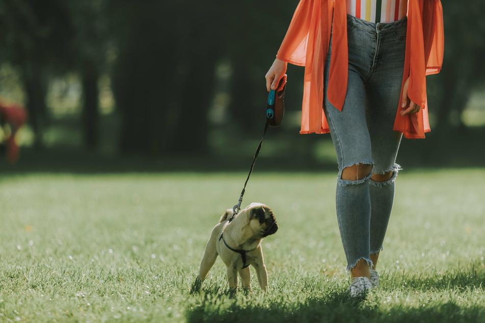 Hundebesitzer in Mönchengladbach-Windberg sollten wegen mutmaßlicher Giftköder-Gefahr derzeit gut auf ihre Vierbeiner aufpassen! (Symbolbild)