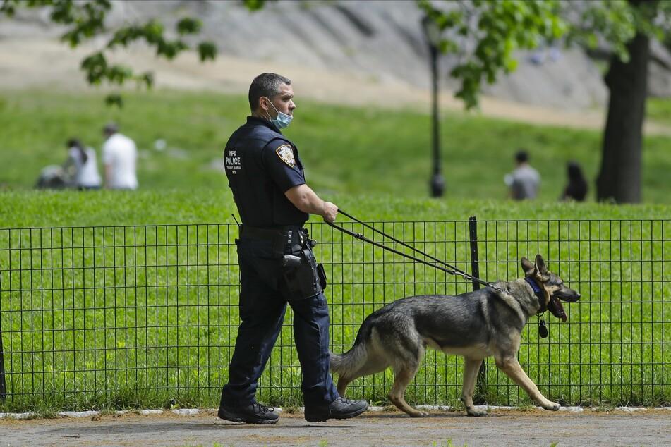 Ein Polizist patrouilliert im Central Park in New York mit seinem Schäferhund. Der berühmte Park wurde kürzlich Schauplatz eines rassistischen Vorfalls.