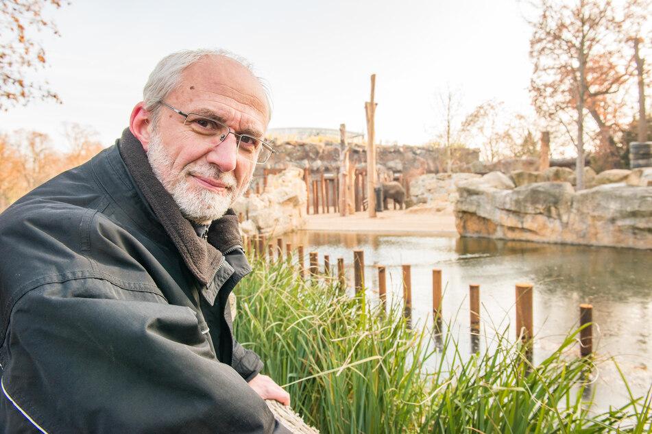 Zoo-Inspektor Wolfgang Ludwig (60) hofft, dass es ein neuer Bulle für Nachwuchs sorgen wird