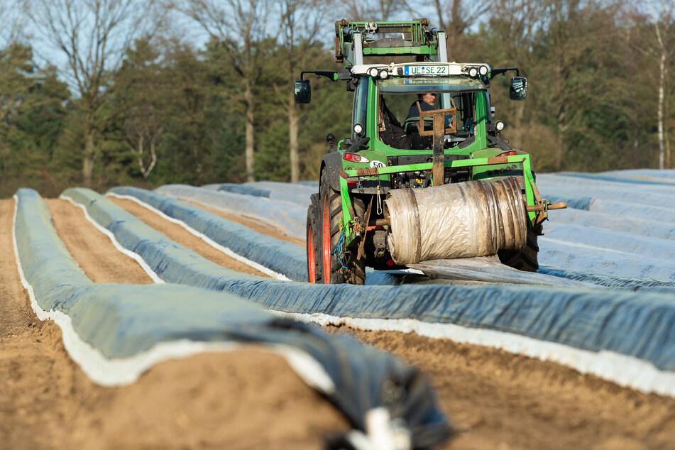 In Niedersachsen deckt ein Spargelbauer mithilfe eines Traktors die angehäufelten Spargelbeete auf seinem Feld mit Folie ab. Im kalten Frühjahr kam das wärmeliebende Edelgemüse nur langsam ins Wachsen.