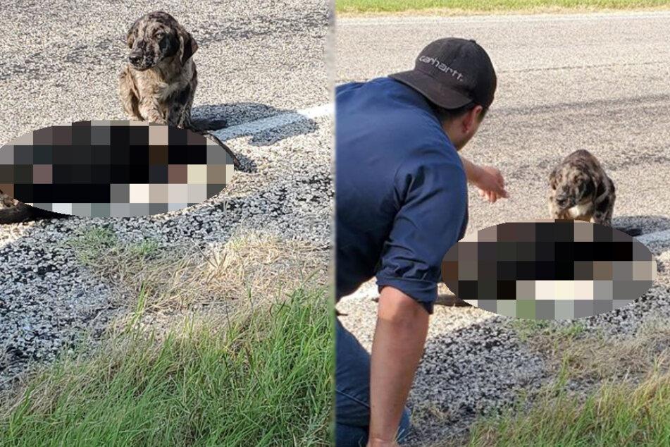 Hund sitzt verlassen neben totem Vierbeiner, doch seine Retter ahnen nicht, was sie erwartet