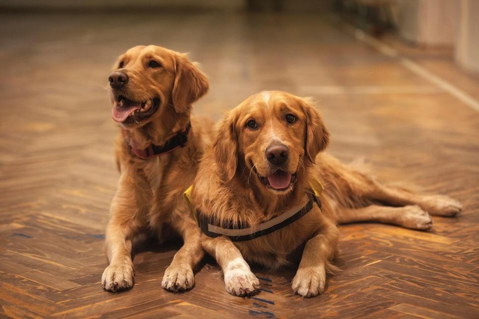 Ist die Rangordnung zwischen den Hunden geklärt, dann steht einer friedlichen Beziehung zueinander nichts mehr im Weg.