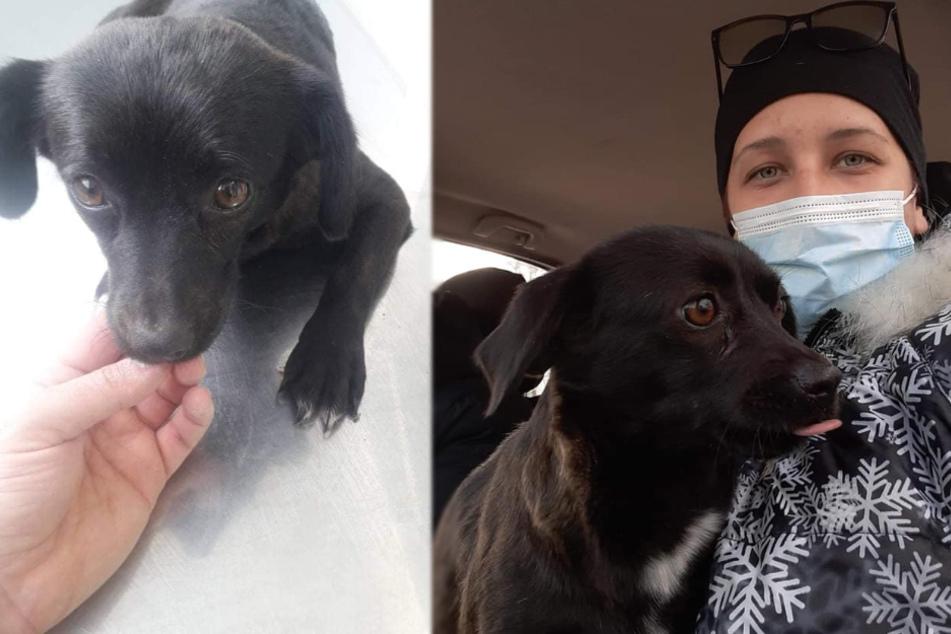 Frau rettet Hund vor bösen Streunern: Dann erlebt sie eine Überraschung nach der anderen