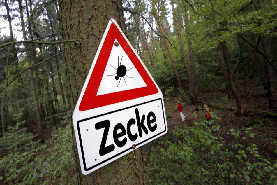 Achtung! Zecken lauern auf Gräsern, Sträuchern und im Unterholz.