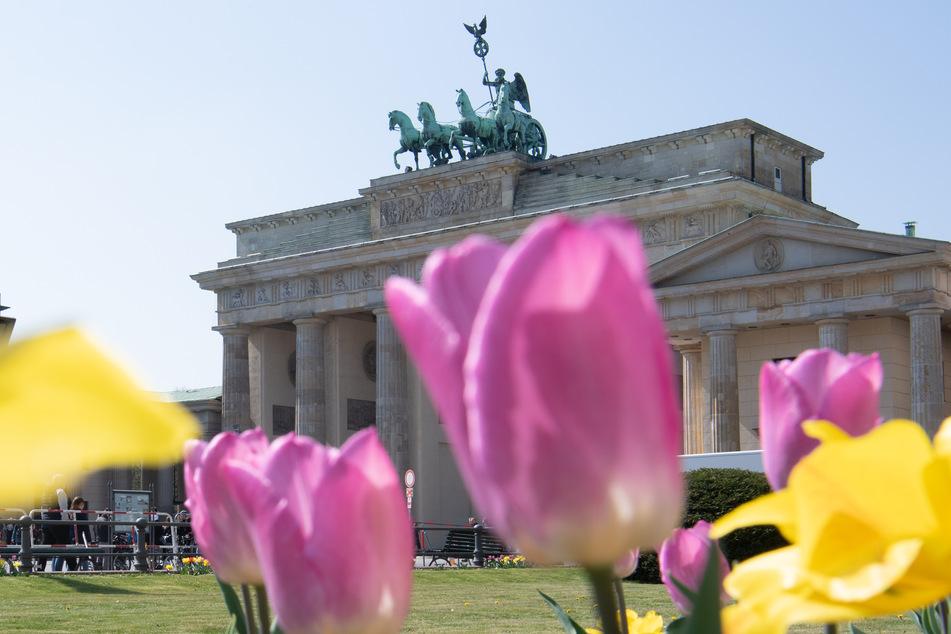 Es wird endlich wärmer in Berlin!