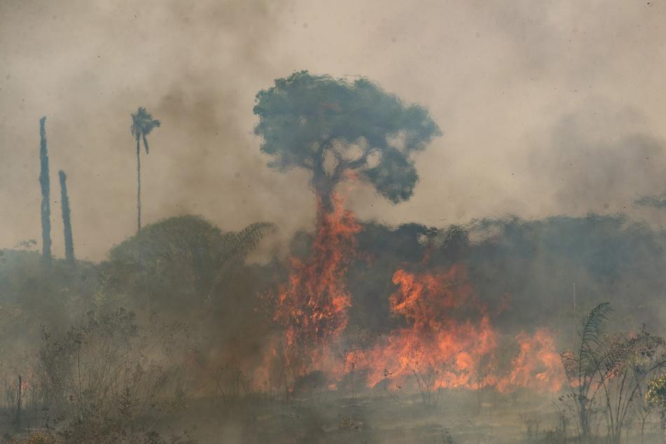 Die Waldbrände im vergangenen Jahr erschütterten nicht nur das Land, sondern auch die ganze Welt. Bolsonaro (66) leugnete sie.