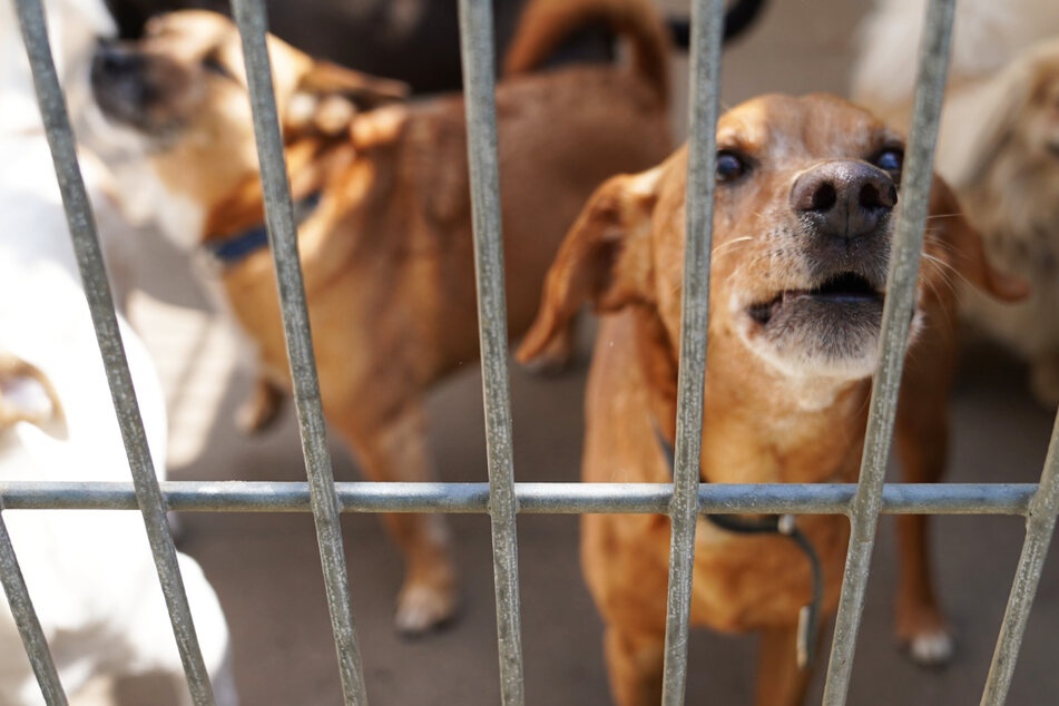 Tierschützer rechnen damit, dass bald zahlreiche Hunde und Katzen in den Tierheimen abgegeben werden. (Symbolbild)