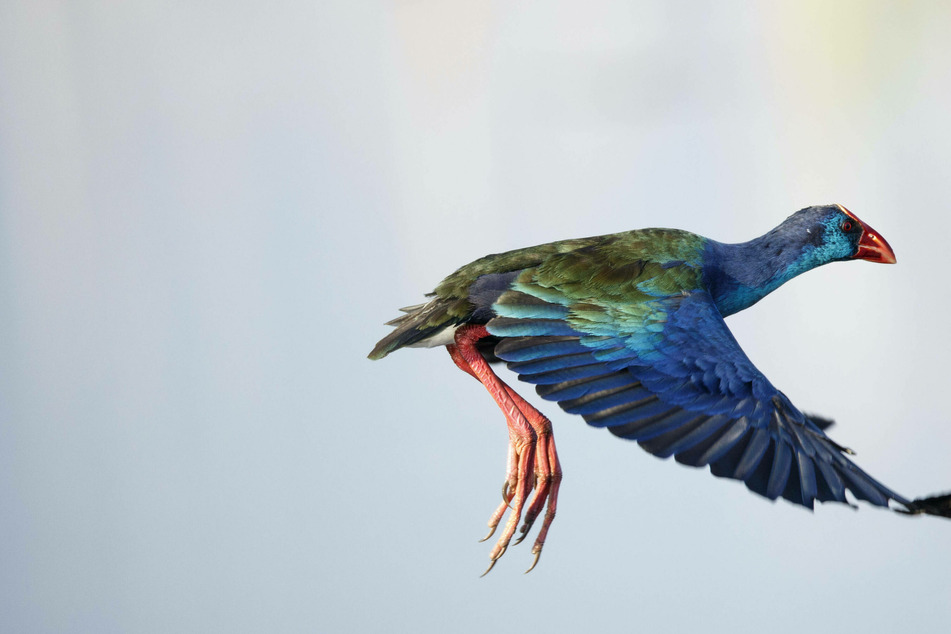 Strange exotic birds appear in Maine at an unlikely time of year