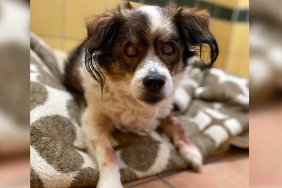 Er geht mit 14 Jahren zwar nicht mehr als Junghund durch, doch trotz seines Alters hat Bubble aus dem Tierheim Köln-Dellbrück noch Einiges zu bieten!