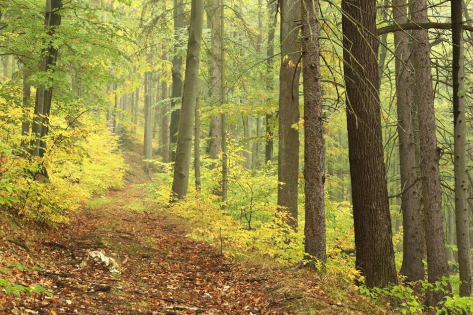 München: Grusel-Fund! Schädel eines Menschen in Wald entdeckt