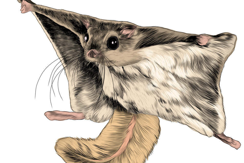 Flying squirrels have skin flaps that allow them to glide through the air.