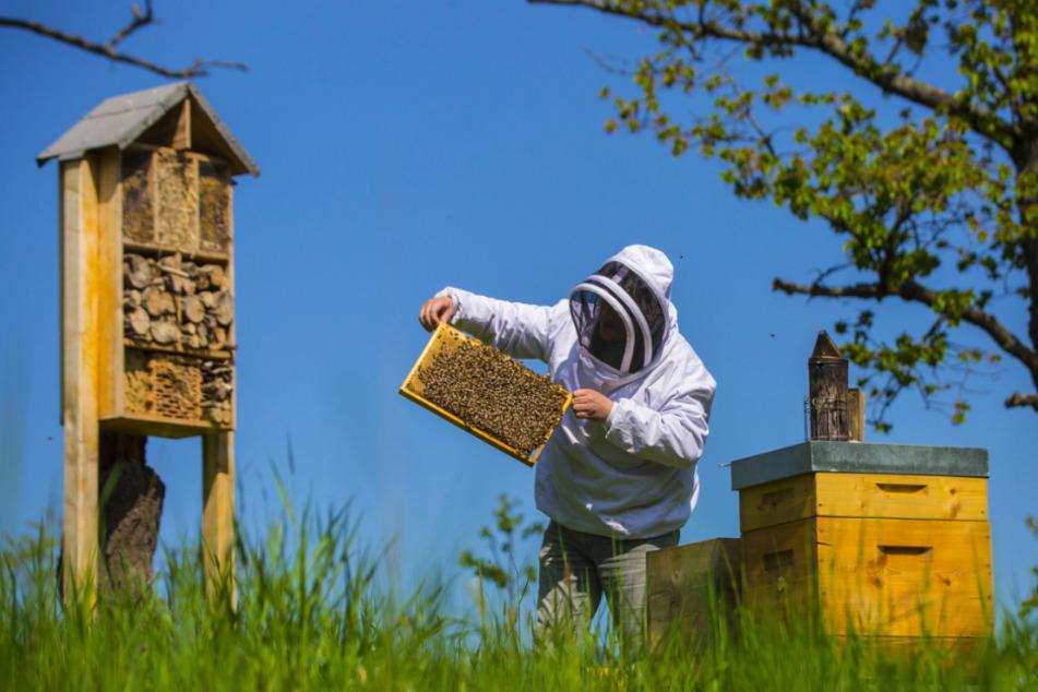 Wer Bienen mag, ist hier genau richtig.