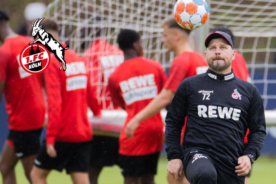 1. FC Köln: Sichtschutz am Geißbockheim darf weg, freier Blick für Fans!