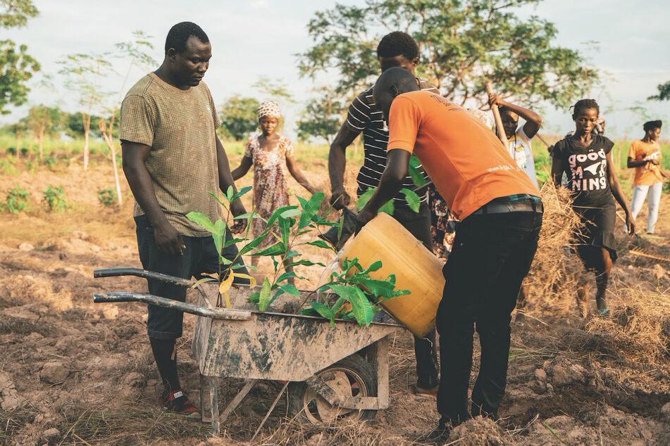 Ein Bild aus dem Projekt: Männer pflanzen Bäume.