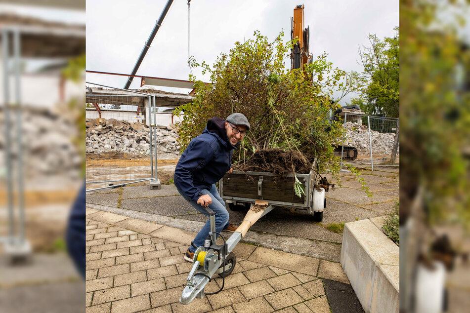 Mathias Körner (43) lud die Rose samt darin verwachsener Rankhilfe auf einen Anhänger.