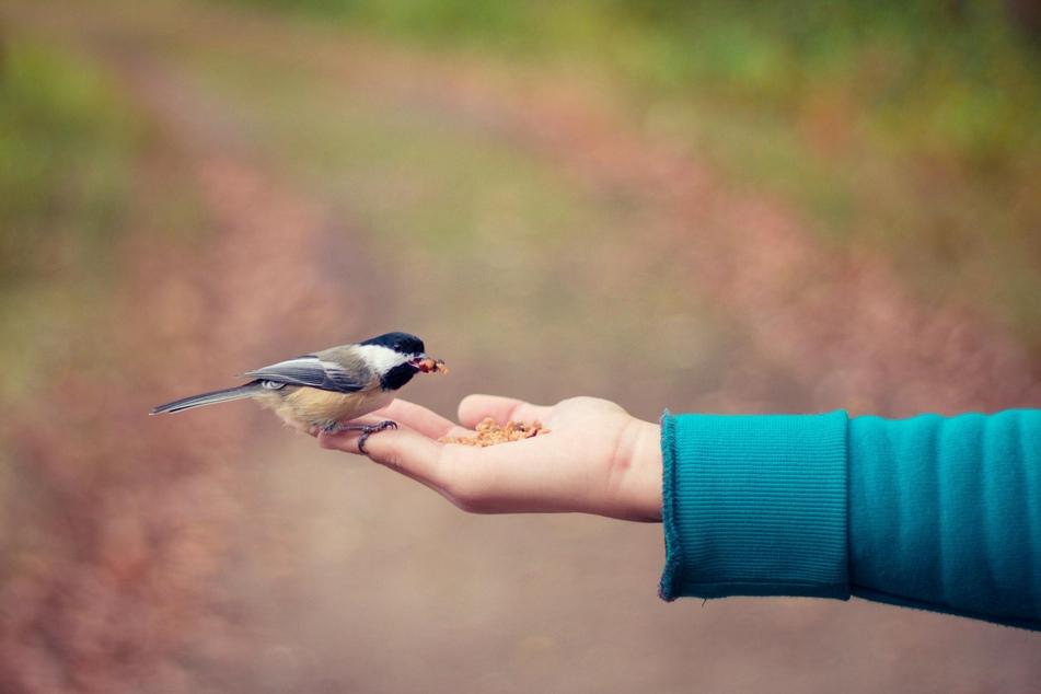 Nicht alle Lebensmittel sind für die Vogelfütterung geeignet.