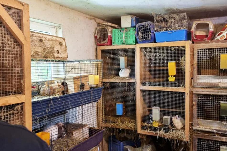 In solchen Ställen und Käfigen wurden die Tiere in einem Haus gehalten.