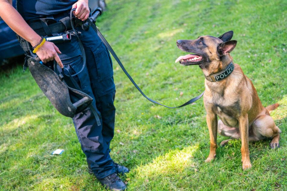 Missstand bei ausgemusterten Polizeihunden: Freistaat in der Kritik