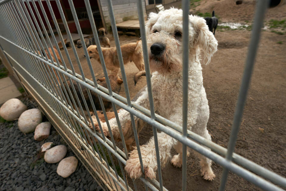 Darum sind Hunde und Katzen in Tierheimen ein so großes Problem