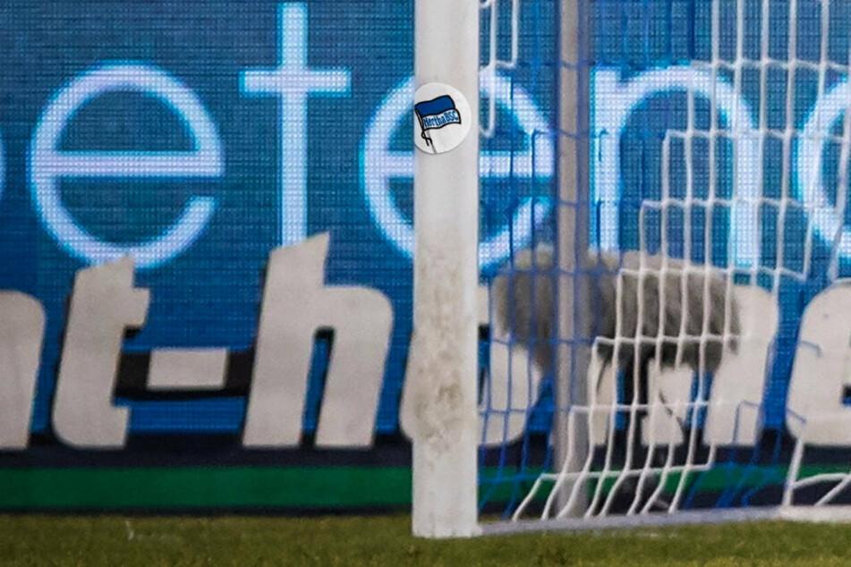 Der linke Pfosten hat Hertha BSC im Spiel beim FC Schalke 04 gleich zweimal kurz nacheinander den Sieg gerettet.