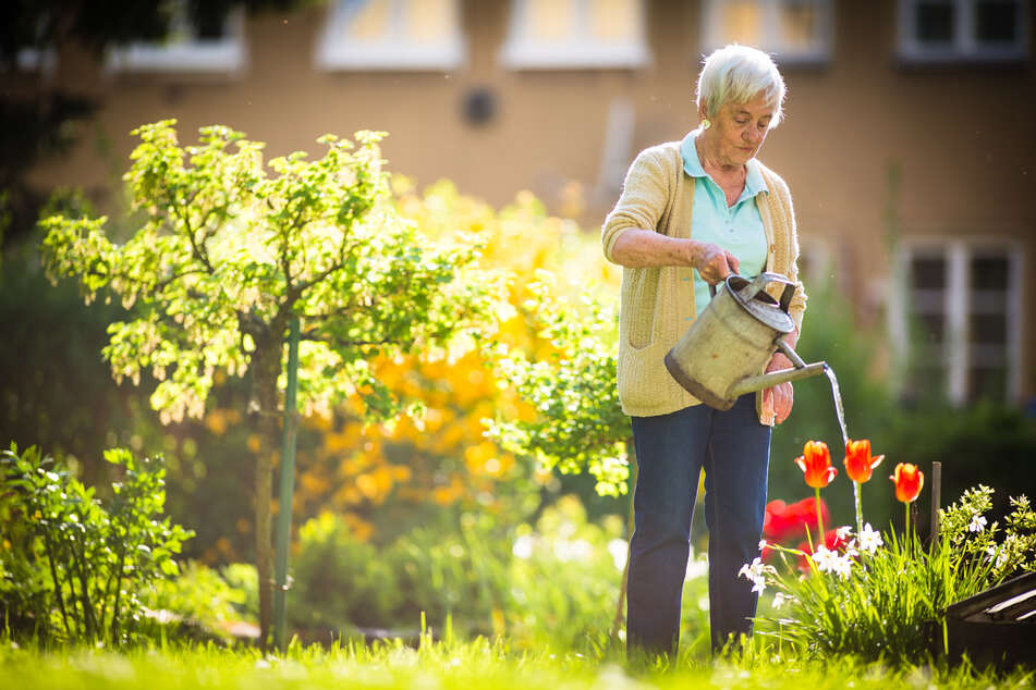Beim Blumenwässern im Sommer besser kein Wasser auf die Blätter gießen. (Symbolbild)
