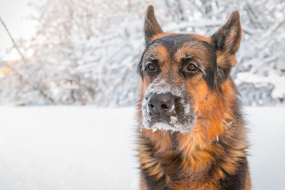Bei Schnee und Kälte ließ die Frau die Hunde einfach zurück. (Symbolbild)
